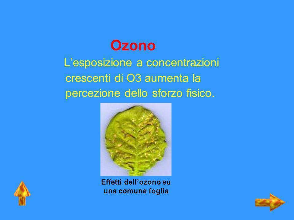 Effetti dell'ozono su una comune foglia