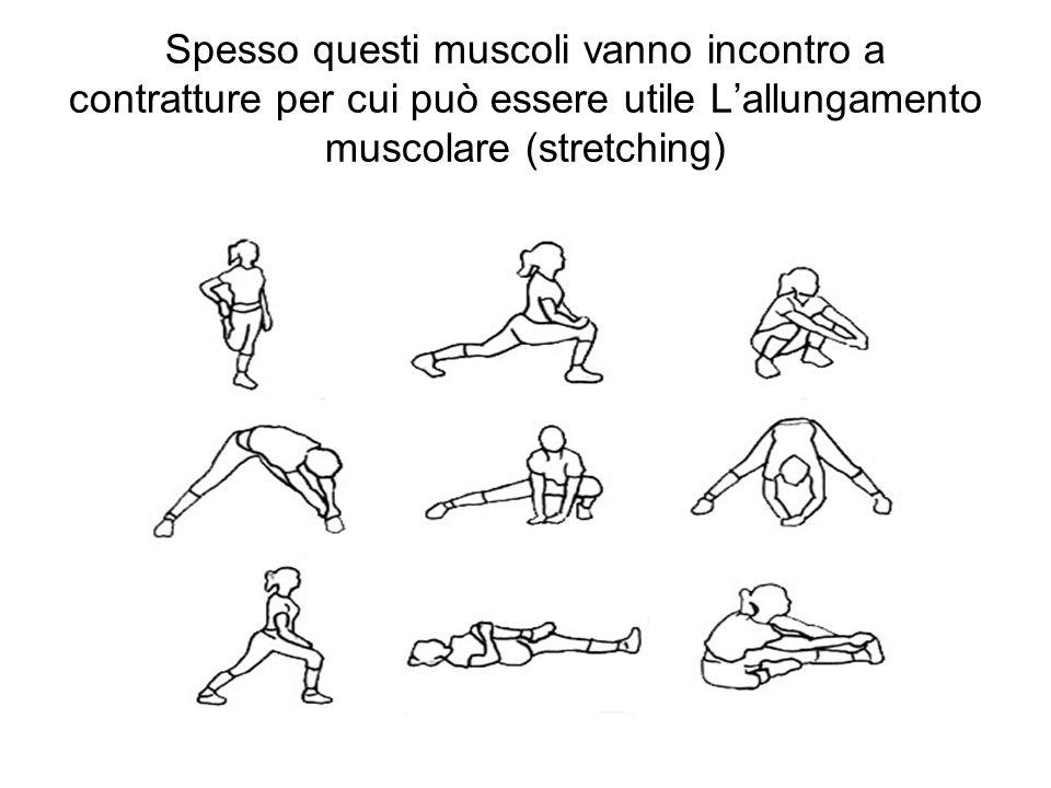 Spesso questi muscoli vanno incontro a contratture per cui può essere utile L'allungamento muscolare (stretching)