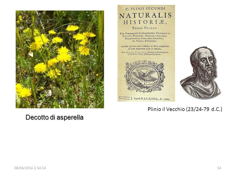 Plinio il Vecchio (23/24-79 d.C.)