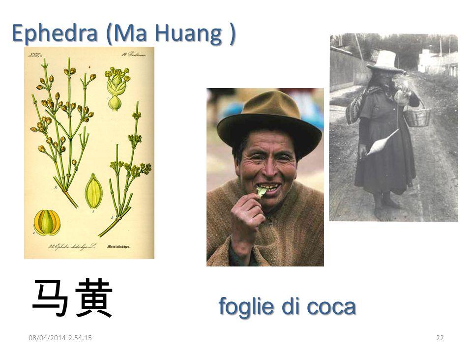 Ephedra (Ma Huang ) 马黄 foglie di coca 29/03/2017 02:28:09