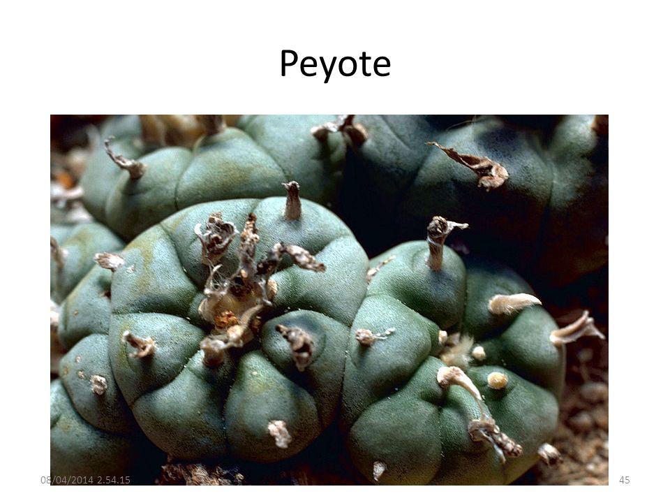 Peyote 29/03/2017 02:28:09