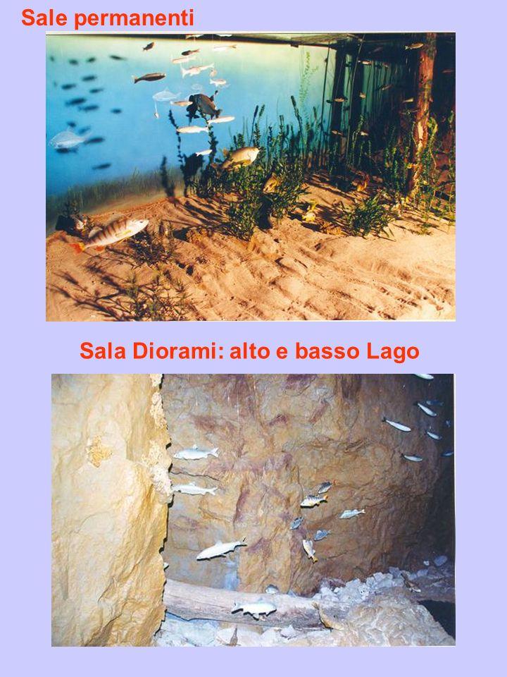 Sale permanenti Sala Diorami: alto e basso Lago