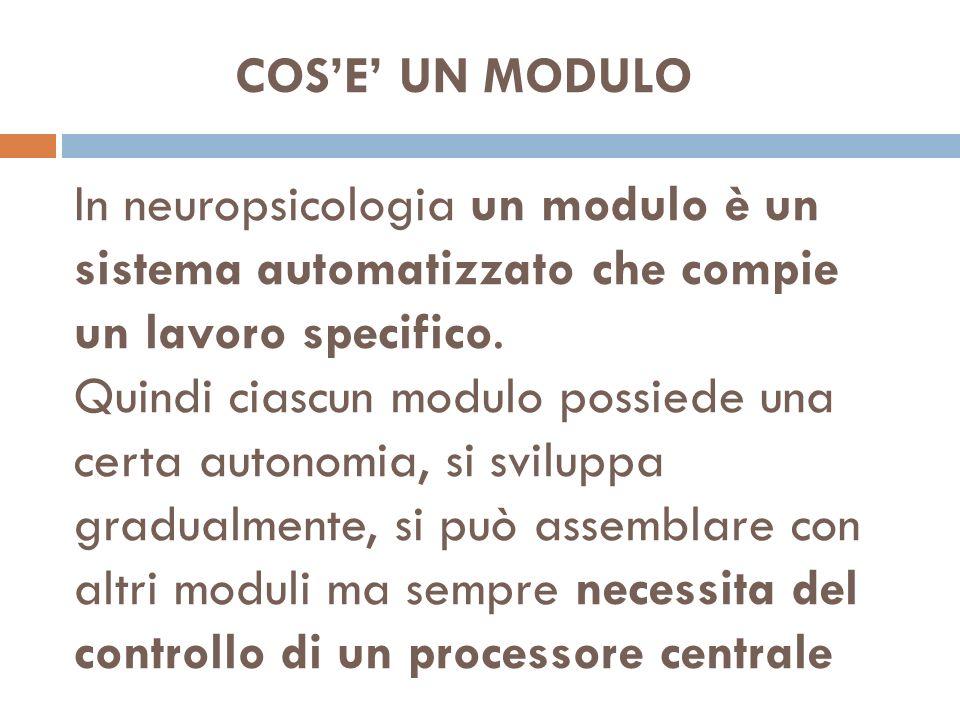 COS'E' UN MODULO In neuropsicologia un modulo è un sistema automatizzato che compie un lavoro specifico.