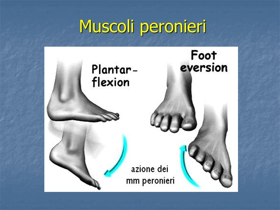 Muscoli peronieri