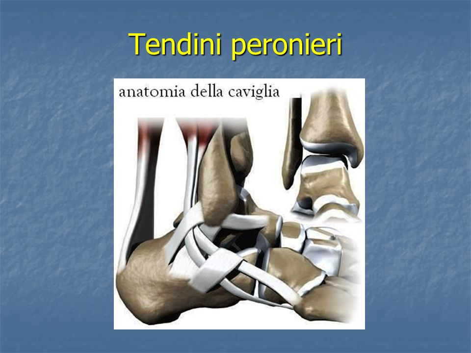 Tendini peronieri