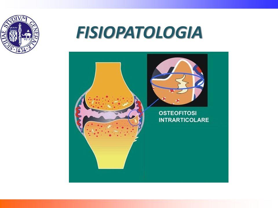 FISIOPATOLOGIA Il processo precedentemente descritto può anche provocare osteofitosi intrarticolare per stimolazione dell'ossificazione encondrale.