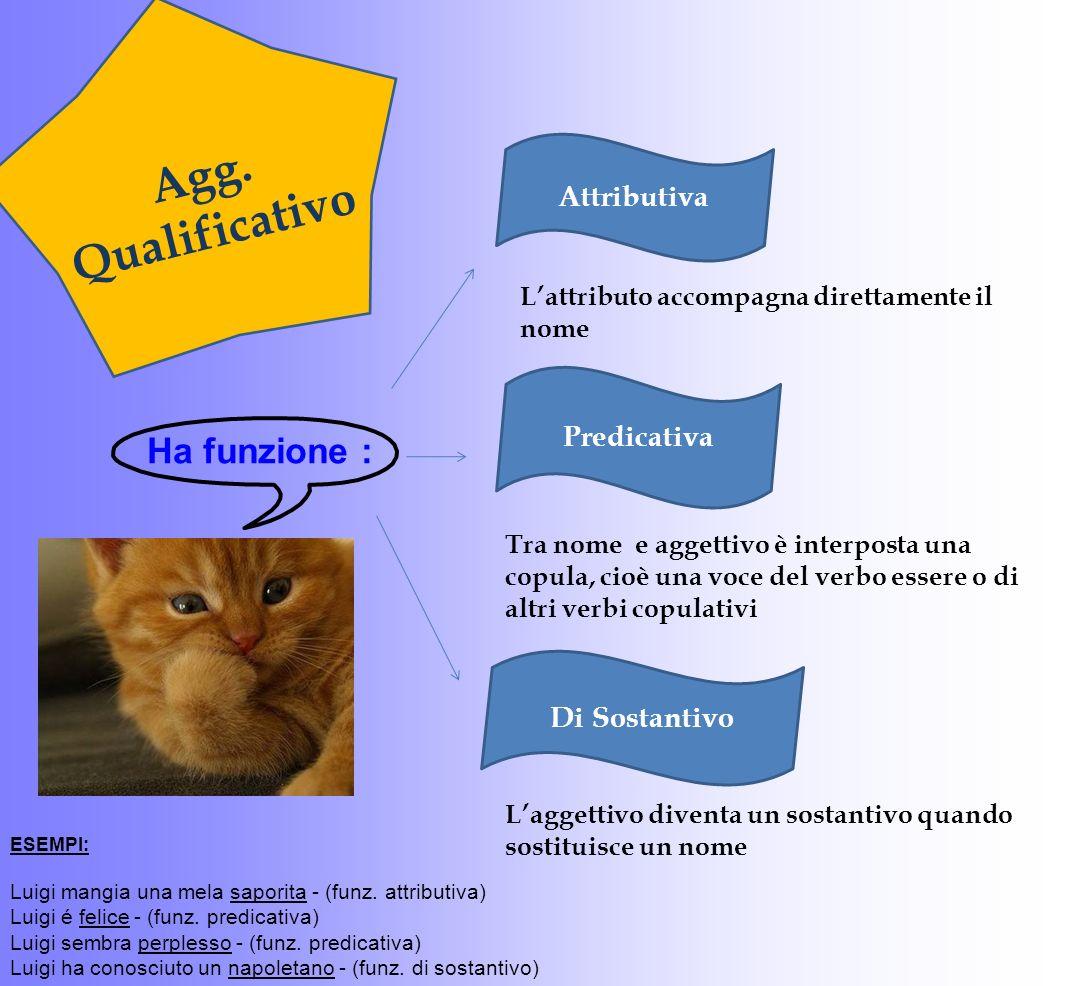 Agg. Qualificativo Ha funzione : Attributiva Predicativa Di Sostantivo