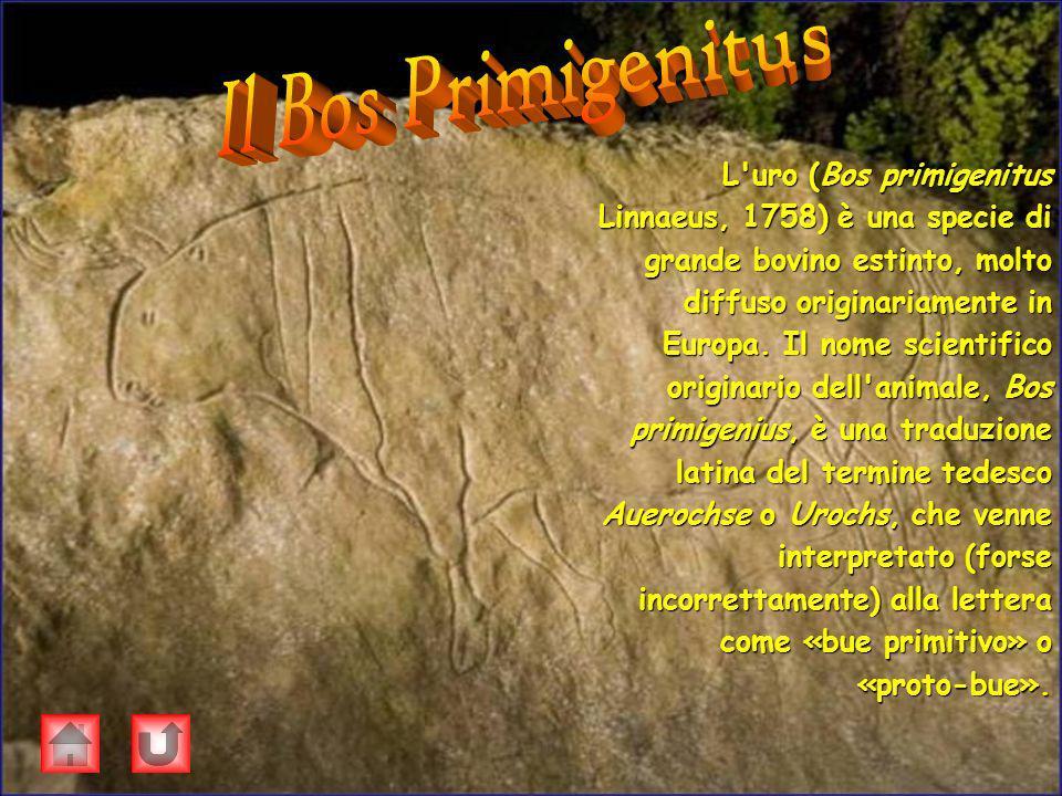 Il Bos Primigenitus