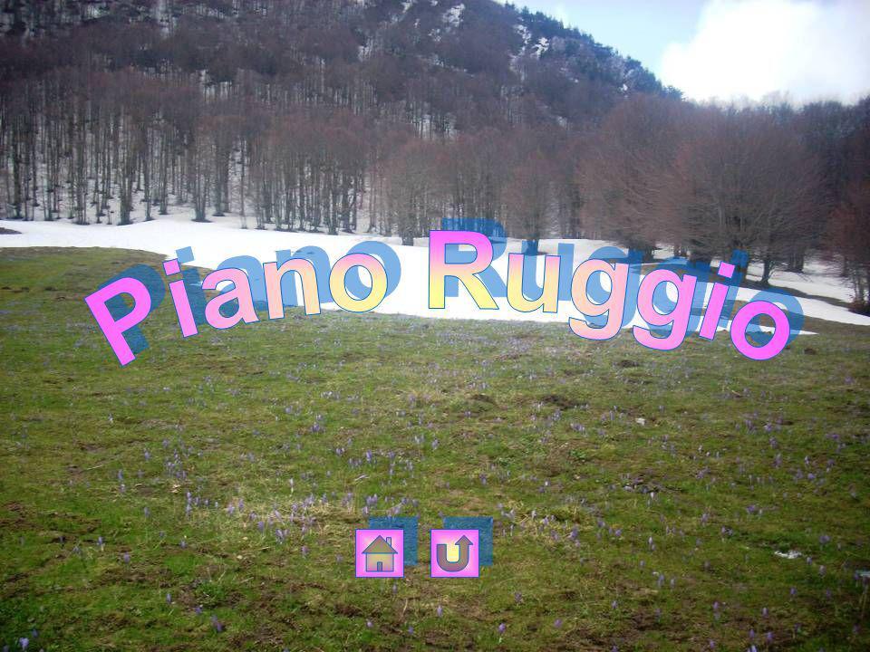 Piano Ruggio