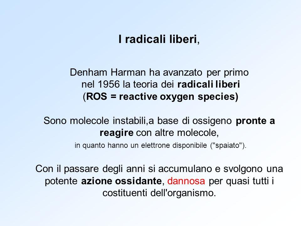 I radicali liberi, Denham Harman ha avanzato per primo