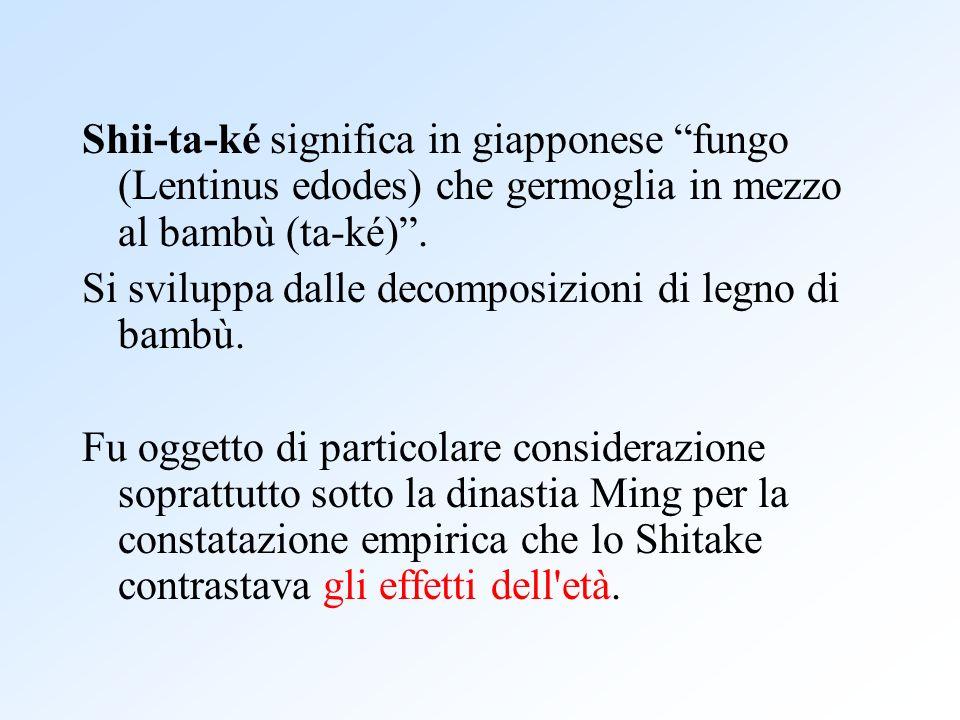 Shii-ta-ké significa in giapponese fungo (Lentinus edodes) che germoglia in mezzo al bambù (ta-ké) .