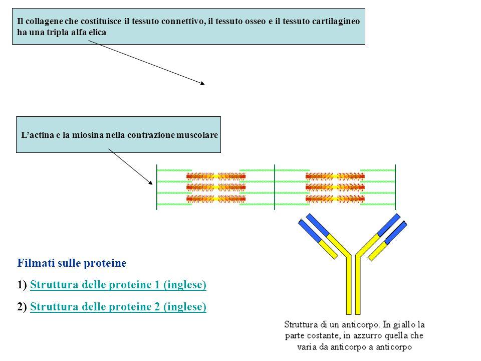 Filmati sulle proteine 1) Struttura delle proteine 1 (inglese)