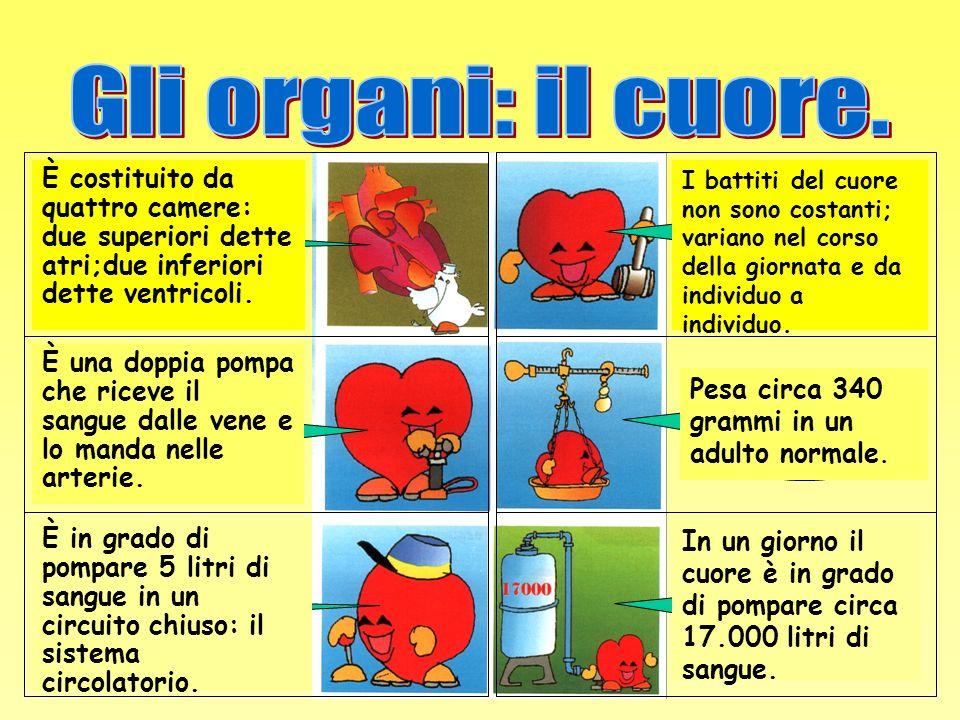 Gli organi: il cuore. Quanto batte Com'è Quanto pesa Come funziona