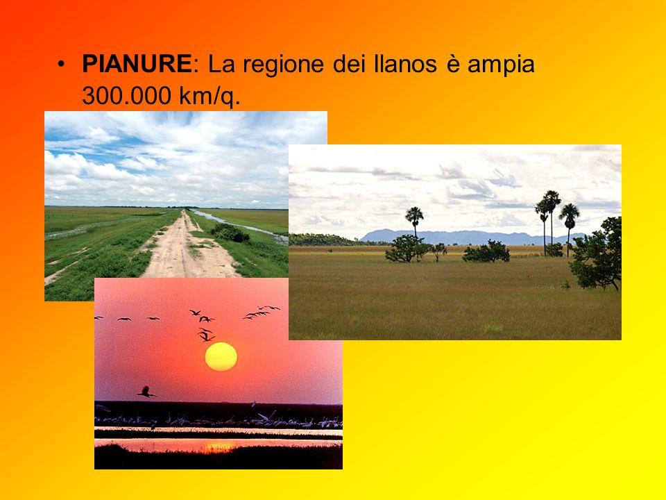 PIANURE: La regione dei Ilanos è ampia 300.000 km/q.