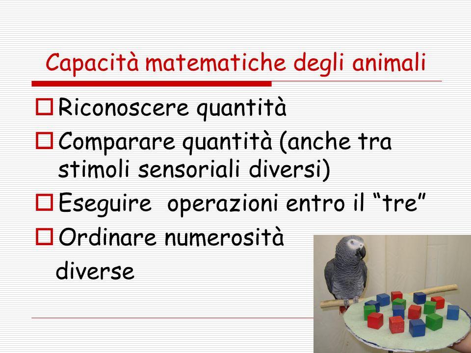 Capacità matematiche degli animali