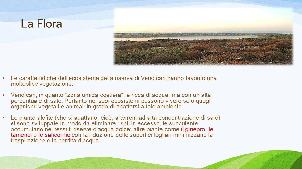La Flora Le caratteristiche dell ecosistema della riserva di Vendicari hanno favorito una molteplice vegetazione.