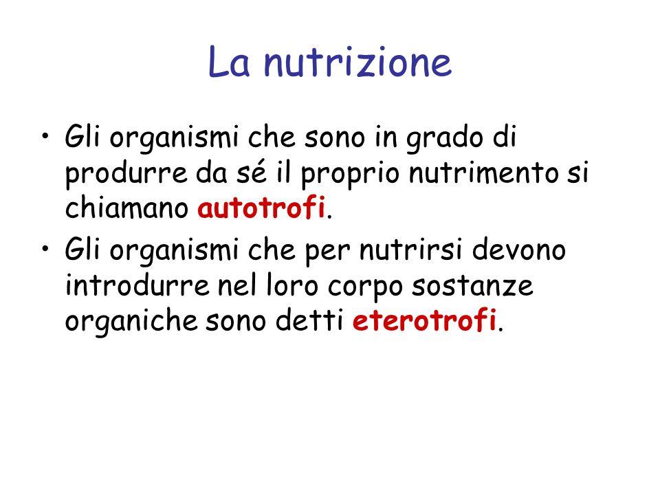 La nutrizione Gli organismi che sono in grado di produrre da sé il proprio nutrimento si chiamano autotrofi.