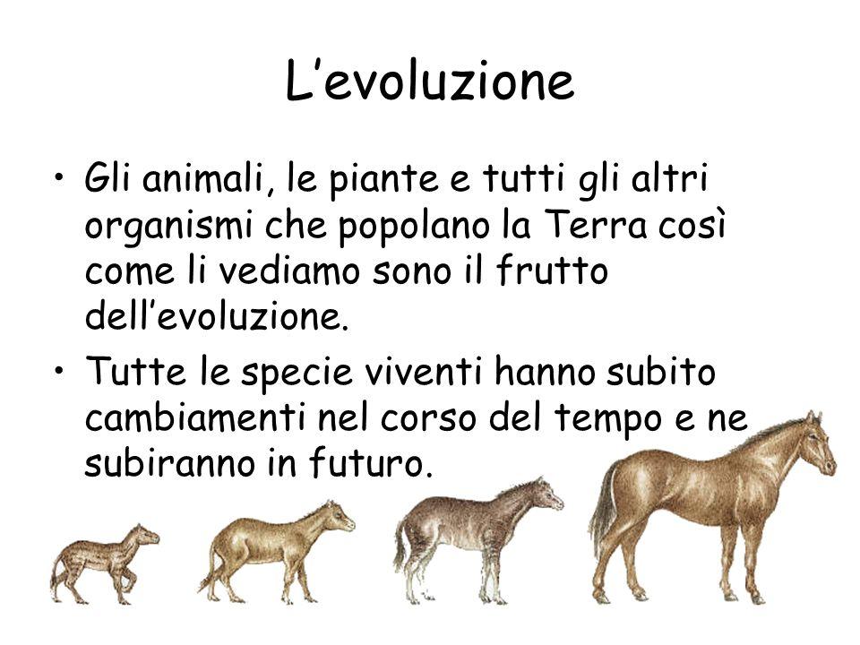 L'evoluzione Gli animali, le piante e tutti gli altri organismi che popolano la Terra così come li vediamo sono il frutto dell'evoluzione.