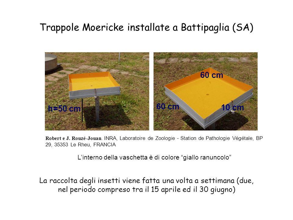 Trappole Moericke installate a Battipaglia (SA)
