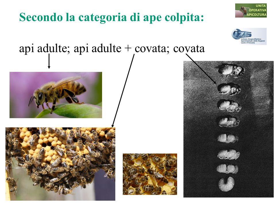 Secondo la categoria di ape colpita: