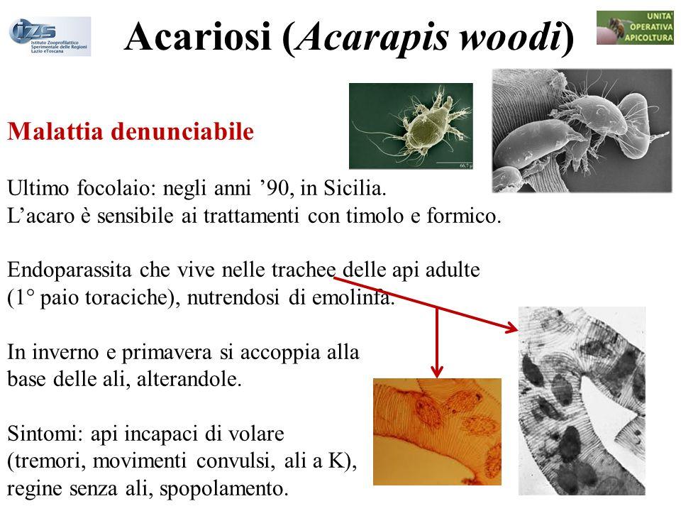 Acariosi (Acarapis woodi)