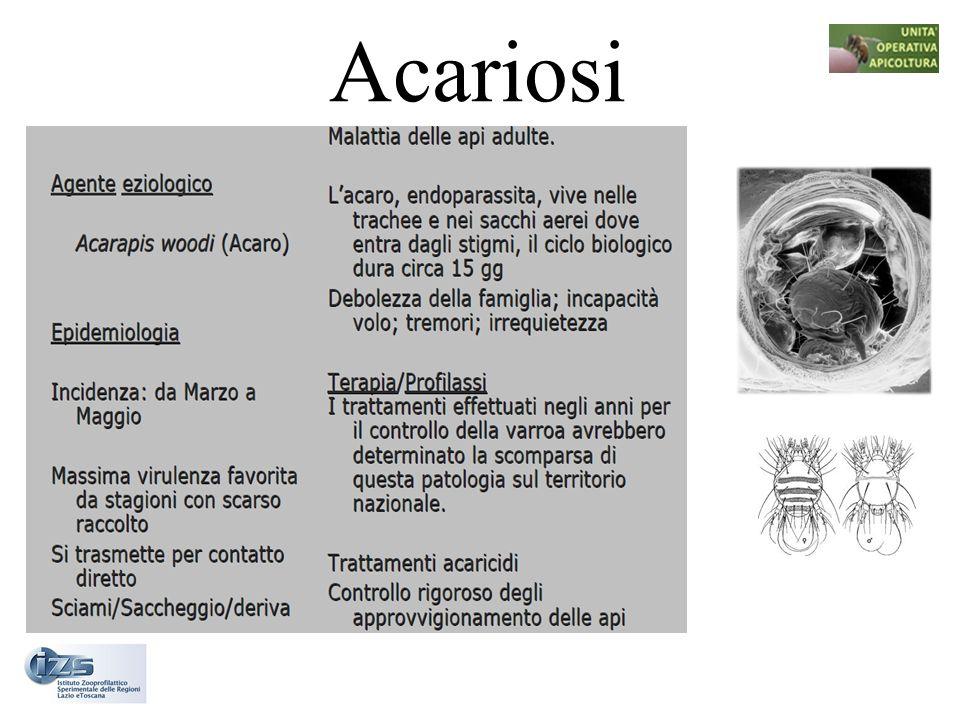 Acariosi