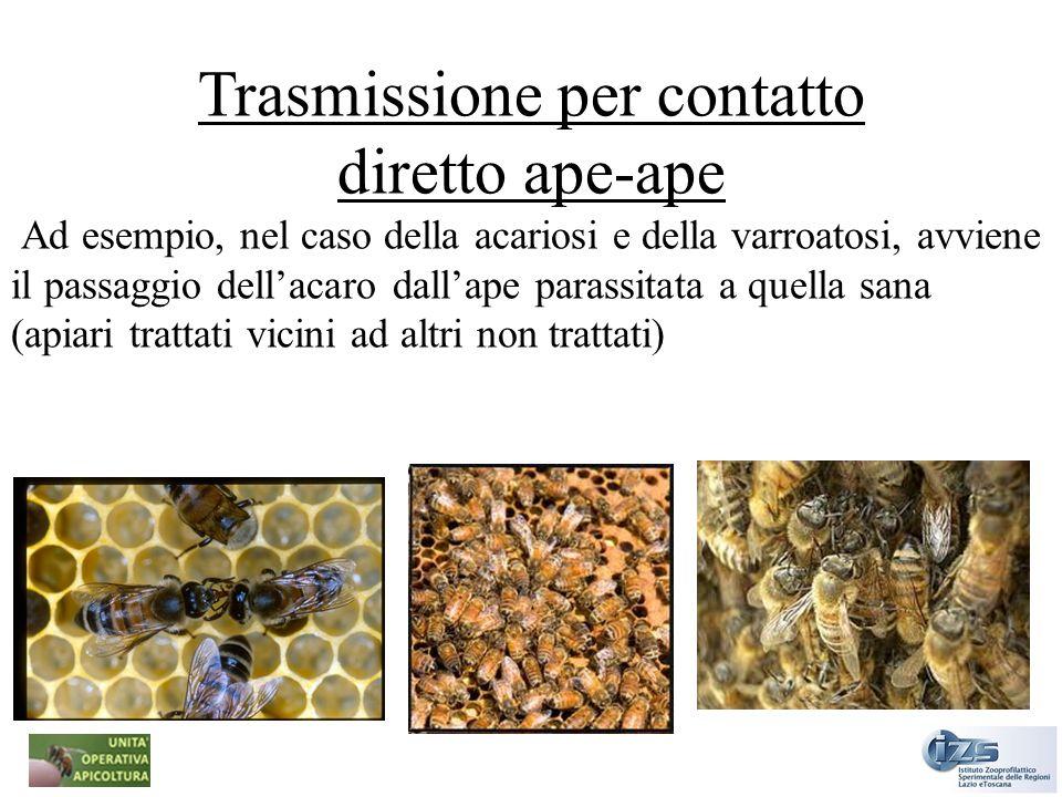 Trasmissione per contatto diretto ape-ape