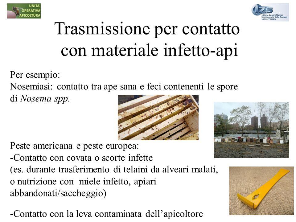 Trasmissione per contatto con materiale infetto-api