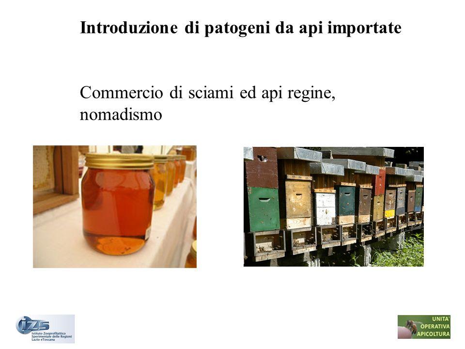 Introduzione di patogeni da api importate