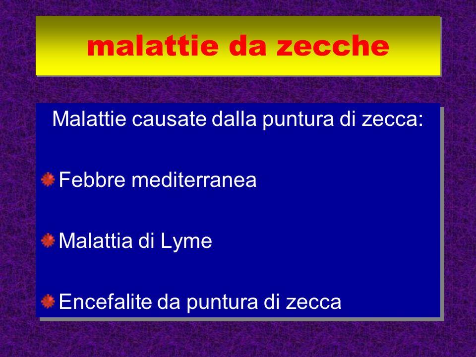 Malattie causate dalla puntura di zecca: