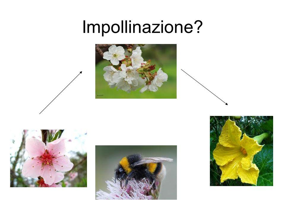 Impollinazione