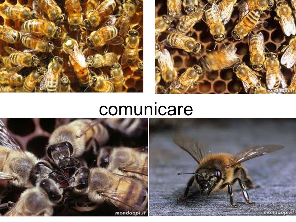 comunicare