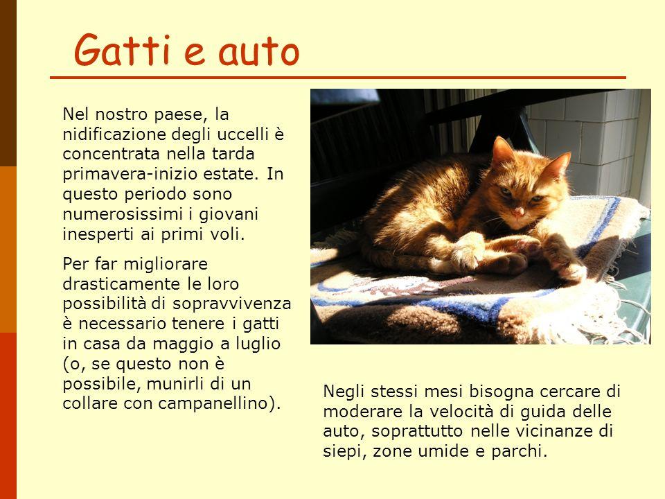 Gatti e auto