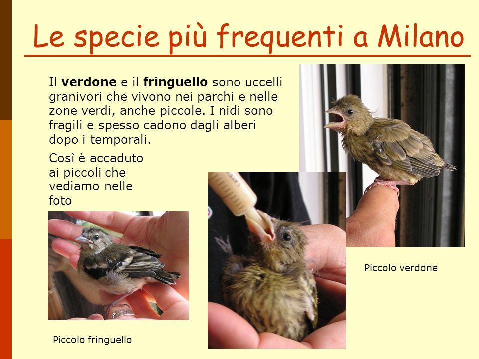 Le specie più frequenti a Milano