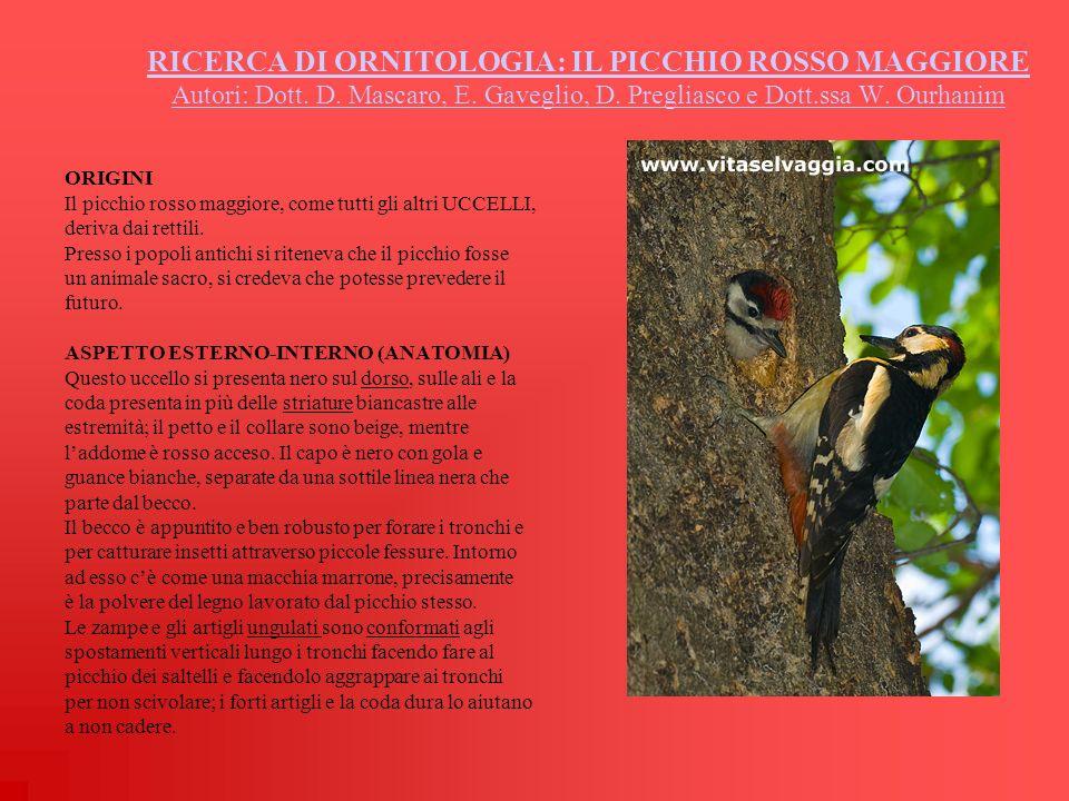 RICERCA DI ORNITOLOGIA: IL PICCHIO ROSSO MAGGIORE Autori: Dott. D