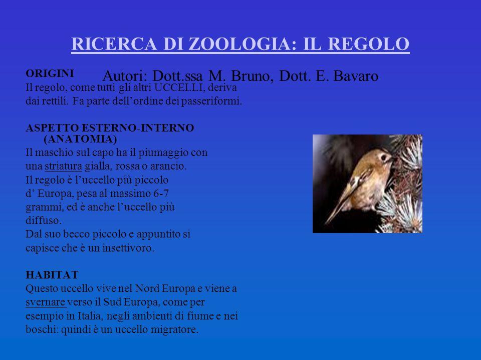 RICERCA DI ZOOLOGIA: IL REGOLO Autori: Dott. ssa M. Bruno, Dott. E