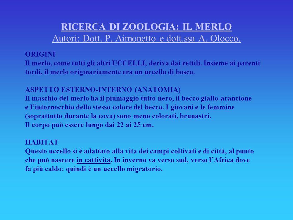 RICERCA DI ZOOLOGIA: IL MERLO Autori: Dott. P. Aimonetto e dott. ssa A