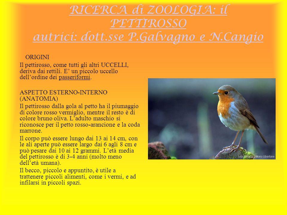 RICERCA di ZOOLOGIA: il PETTIROSSO autrici: dott. sse P. Galvagno e N