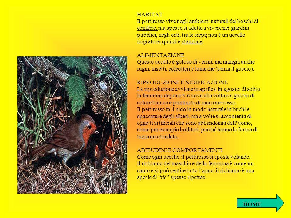 HABITATIl pettirosso vive negli ambienti naturali dei boschi di. conifere, ma spesso si adatta a vivere nei giardini.