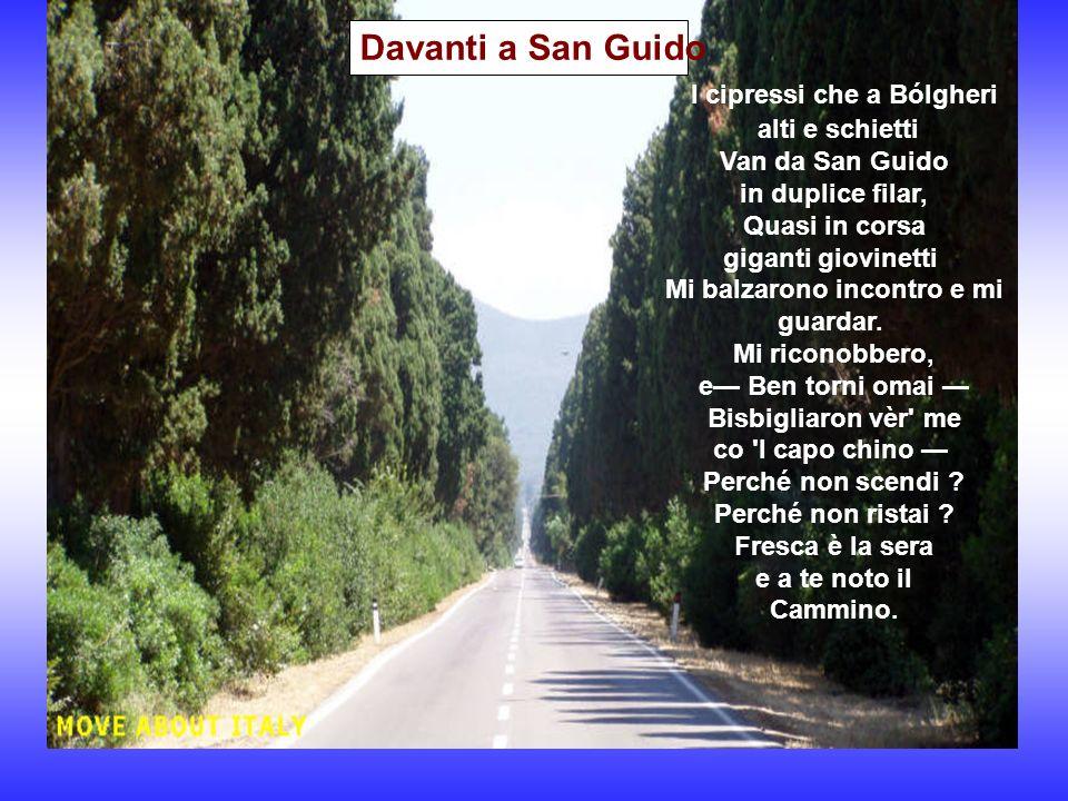 Davanti a San Guido I cipressi che a Bólgheri