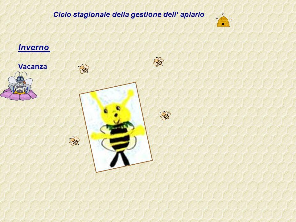 Ciclo stagionale della gestione dell' apiario