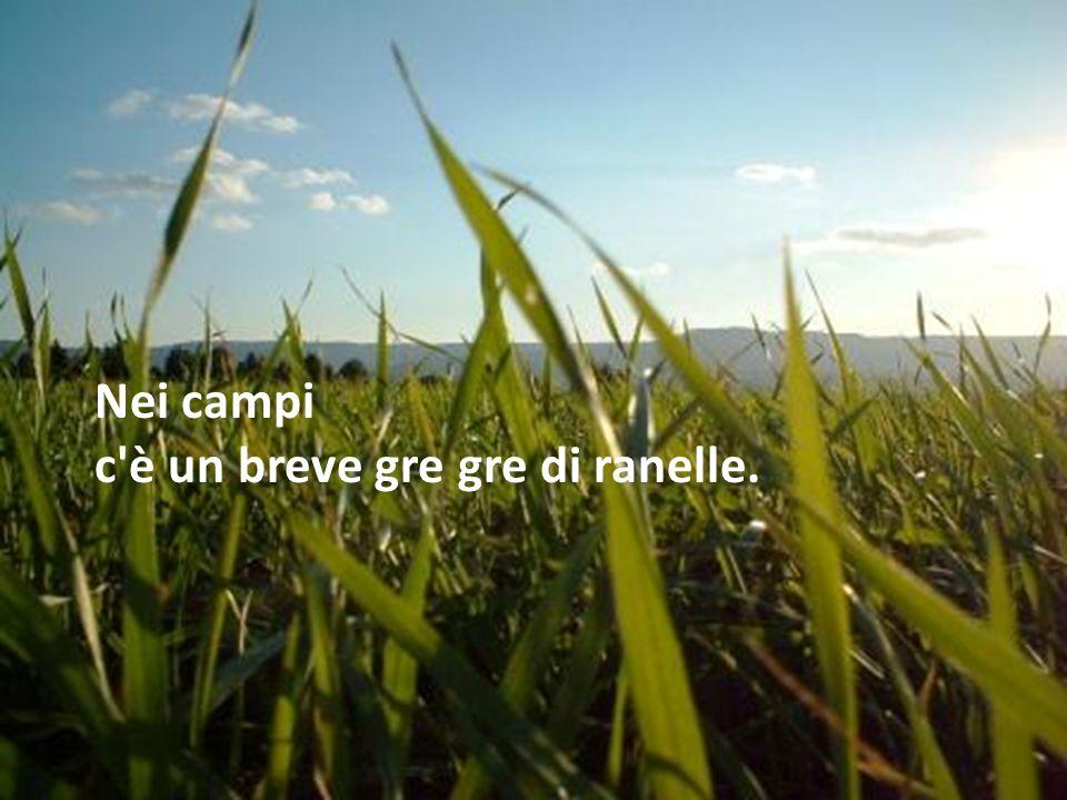 Nei campi c è un breve gre gre di ranelle.