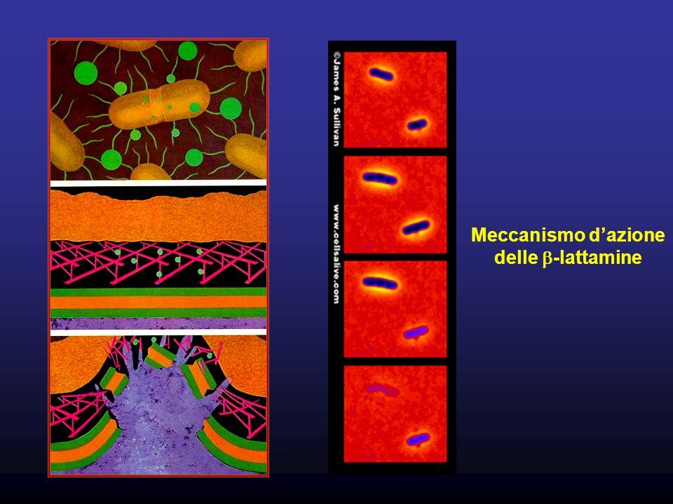 Meccanismo d'azione delle b-lattamine