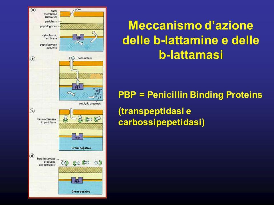 Meccanismo d'azione delle b-lattamine e delle b-lattamasi