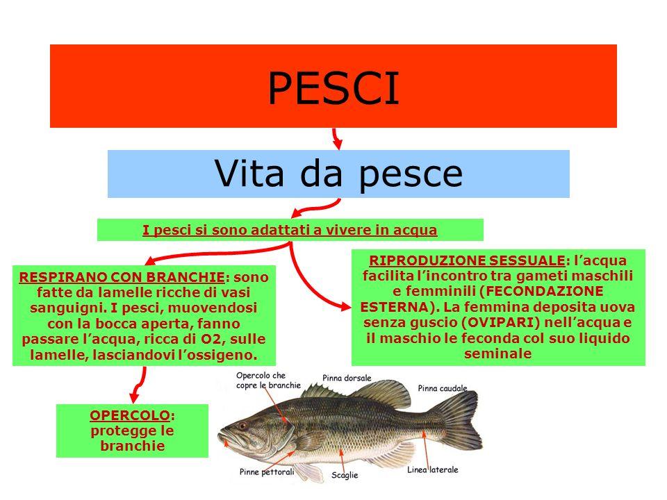 PESCI Vita da pesce I pesci si sono adattati a vivere in acqua
