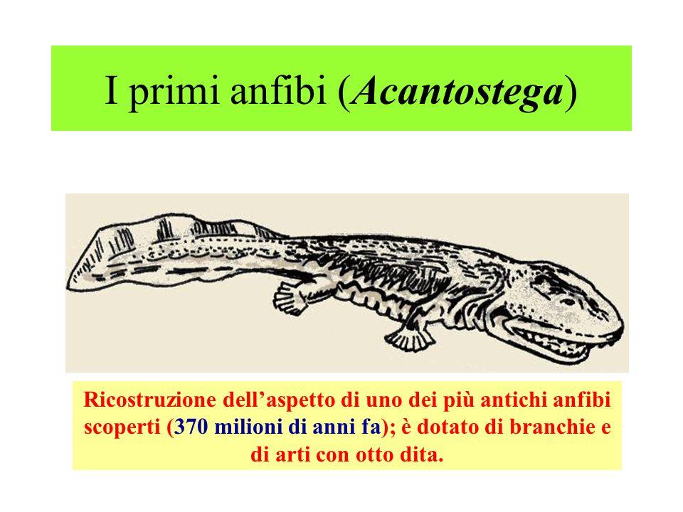 I primi anfibi (Acantostega)