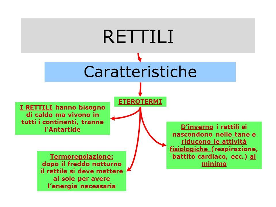 RETTILI Caratteristiche ETEROTERMI