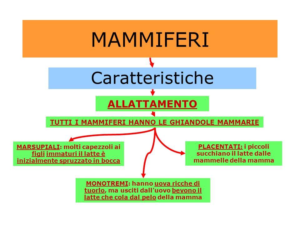 MAMMIFERI Caratteristiche ALLATTAMENTO