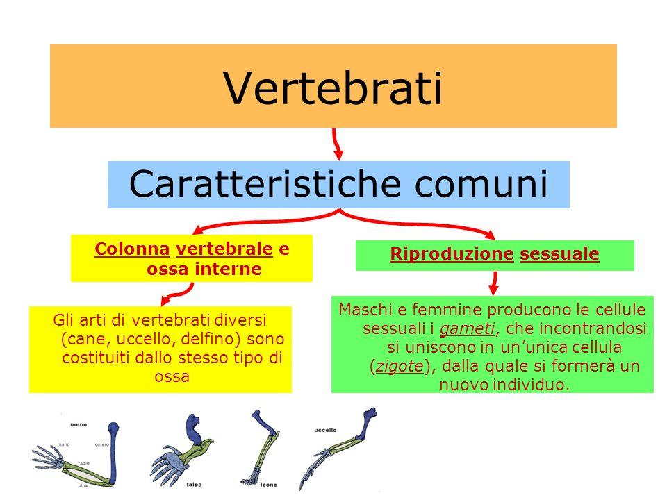 Colonna vertebrale e ossa interne Riproduzione sessuale