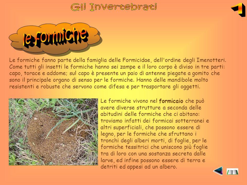 Gli Invertebrati 1 le formiche